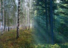 Разница между рощей и лесом в нашем восприятии
