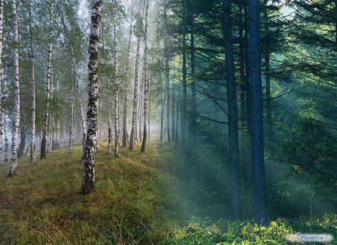 в чем разница между рощей и лесом