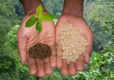 Разница между органическими и минеральными удобрениями