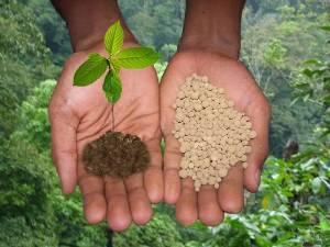 Чем отличаются органические удобрения от минеральных