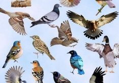 Разница между птицами