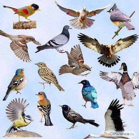 чем отличаются птицы друг от друга