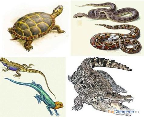 чем отличаются рептилии от земноводных