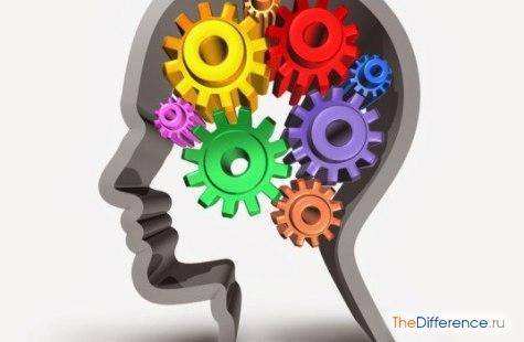 чем отличается ум от интеллекта