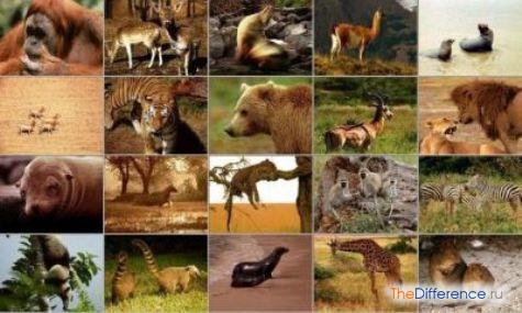 чем отличаются млекопитающие от других животных