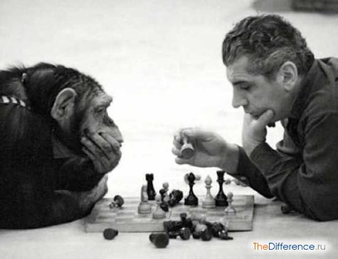 чем отличается психика человека от психики животного