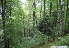 Разница между смешанными и хвойными лесами
