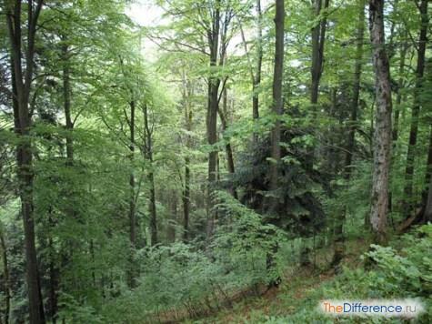 чем отличаются смешанные леса от хвойных