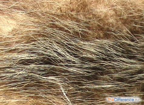 разница между волосами и шерстью