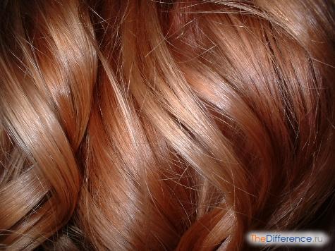 чем отличаются волосы от шерсти