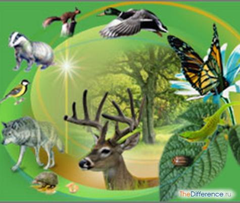 чем отличается биоценоз от биогеоценоза