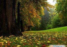 Разница между биогеоценозом и агроценозом