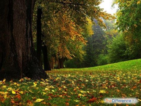 Чем отличается биогеоценоз от агроценоза