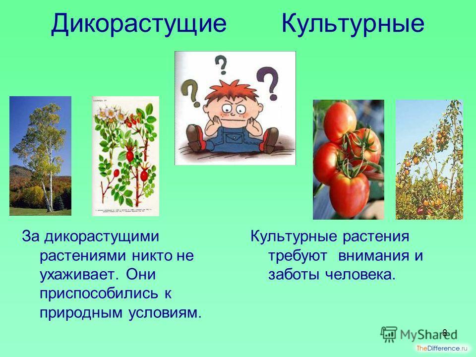 Чем отличаются культурные растения от диких