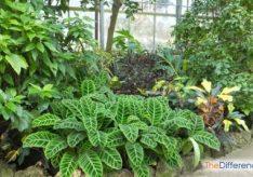 Разница между классификацией растений и животных