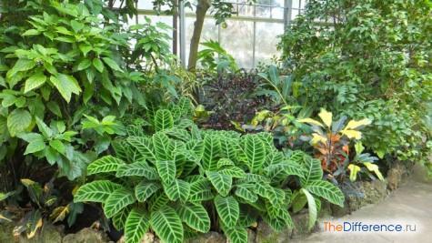 чем отличается классификация растений от классификации животных