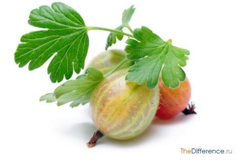 чем отличается ягода от овощей