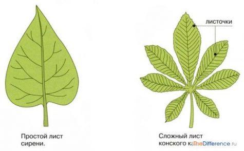 чем отличаются листья друг от друга