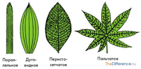 отличие листьев друг от друга
