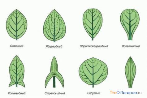 разница между листьями