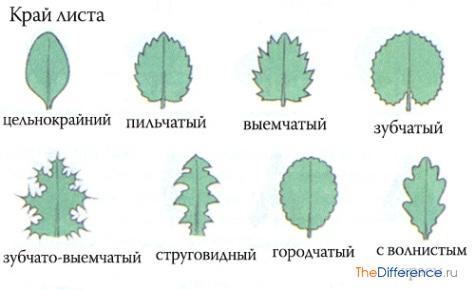 в чем разница между листьями