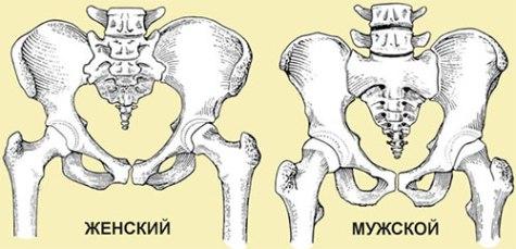 отличие мужского скелета от женского